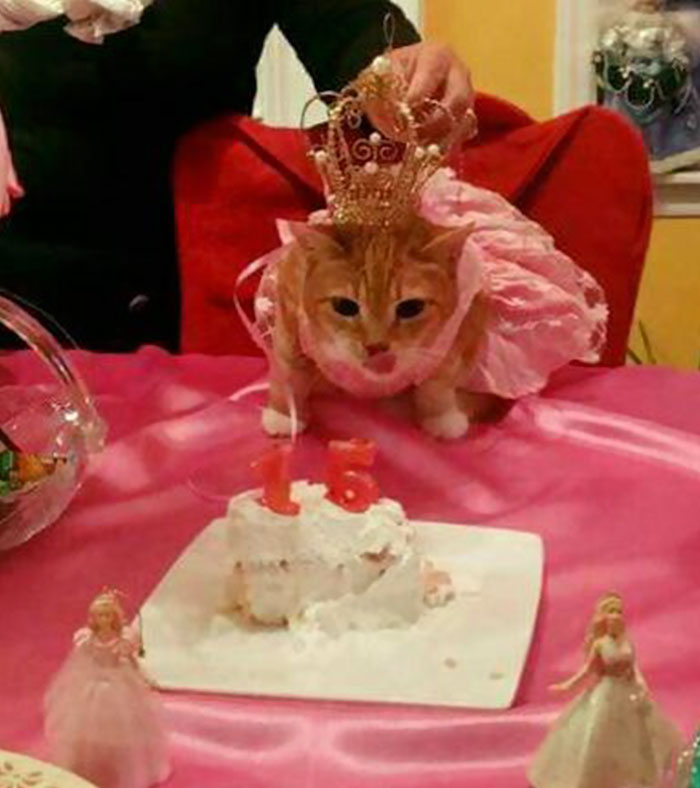 family-throws-cat-quinceanera-party-luna-9