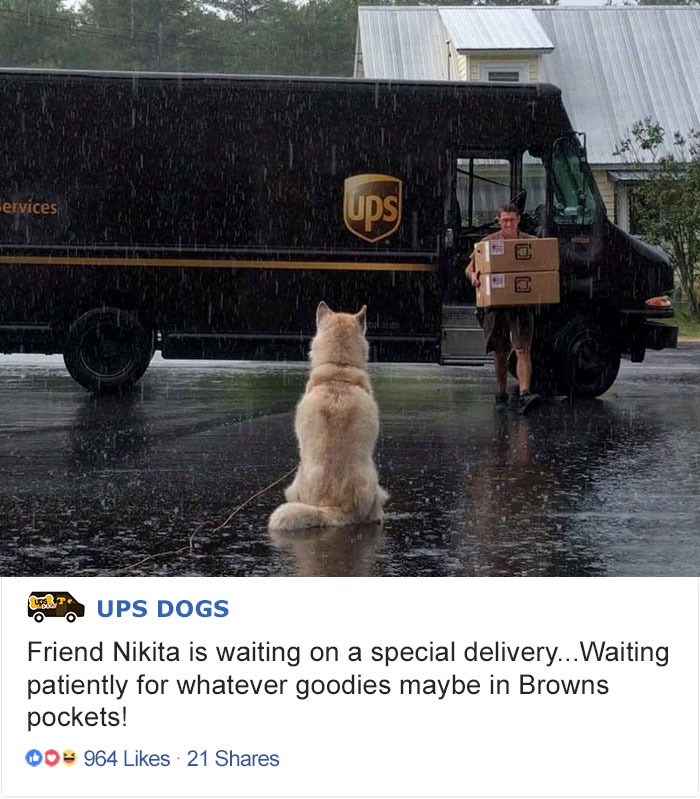 ups-dogs-facebook-group-drivers-meet-routes-sean-mccarren-02a