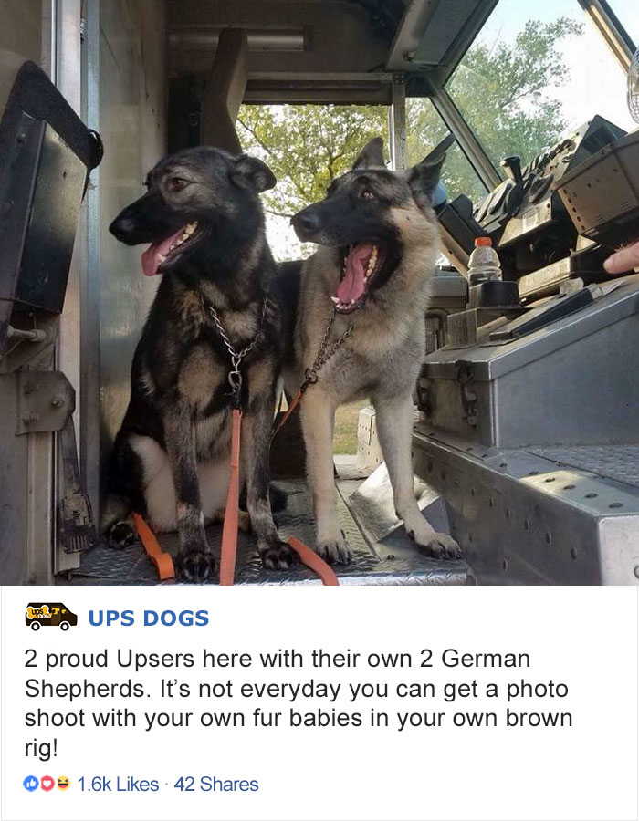 ups-dogs-facebook-group-drivers-meet-routes-sean-mccarren-04